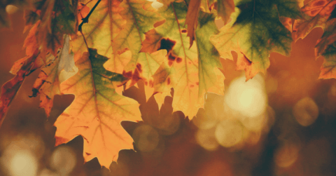 The Ultimate Gardening & Lawn Care Guide - 10 Tasks To Do This Autumn